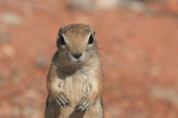 Getting rid of chipmunks thriftyfun getting rid of chipmunks ccuart Image collections