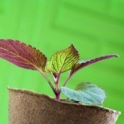 Create Gifts From Plant Cuttings
