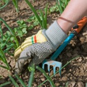 A person in gloves working in a garden.