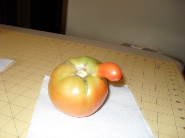 A tomato with an extra growth on the side.