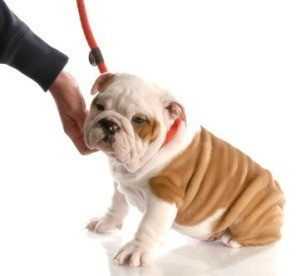 Remedy for Dog with Itchy Skin