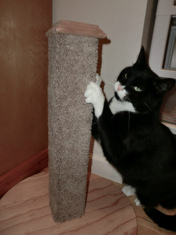 Diy carpet covered cat scratching post thriftyfun for Build your own cat scratch tower