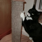 The homemade cat scratching post in action.
