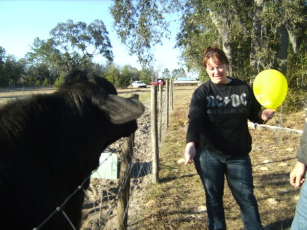 Black Angus and young woman holding a yellow balloon.