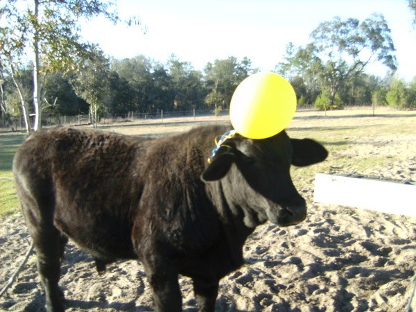 Buddy with balloon on head.