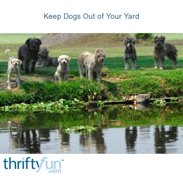 How to Keep Dogs Out of Your Yard | ThriftyFun