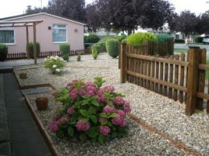 Pink flowering hydrangea in yard.