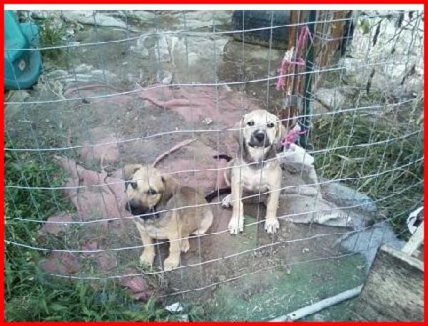 Puppies in an outdoor pen.