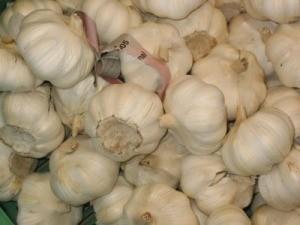 Using Garlic to Prevent Fleas