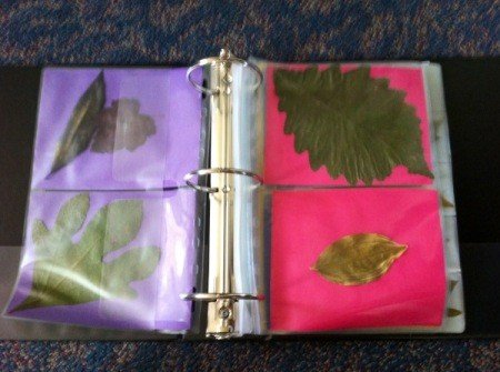 Leaves in DVD sleeves in binder, backed by colorful construction paper..