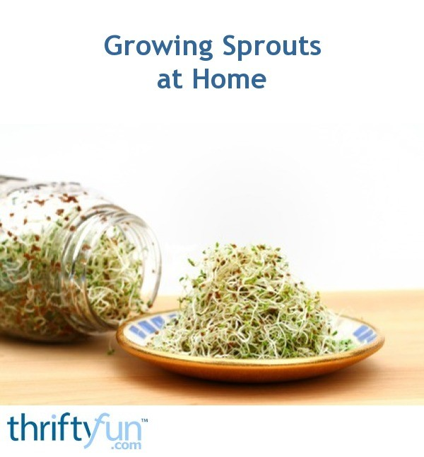 Growing Sprouts | ThriftyFun