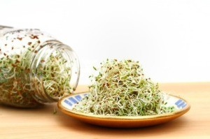 Homegrown sprouts on a kitchen table.