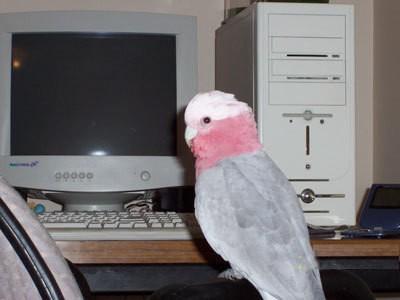 Bird sitting on computer table.