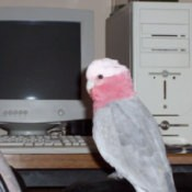 Bird sitting on computer table.