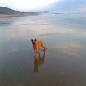 Dog on the beach.