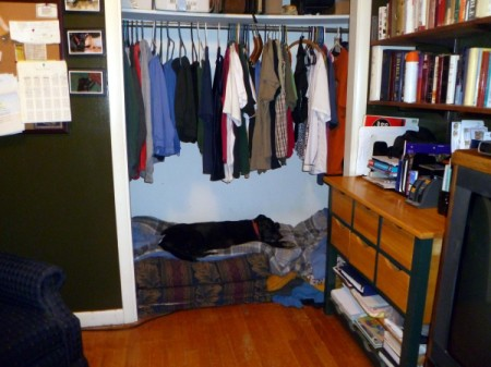 Lab lying on dog bed in closet.