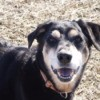 Closeup of older dog.