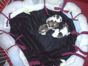 Puppies sleeping in a dog bed made from old socks.