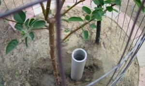 PVC Pipe For Deep Watering