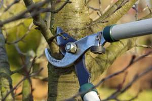 Pruning Sheers
