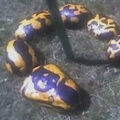 Rocks painted to look like a snake.