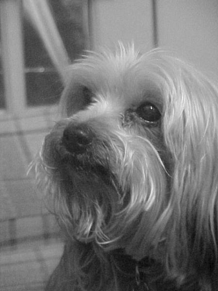 Closeup black and white photo of Hershey.