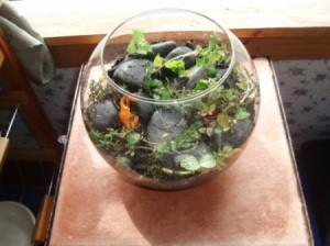 Herb terrarium in a fish bowl