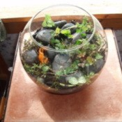 Herb terrarium in a fish bowl