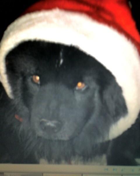 Vader wearing a Santa hat.