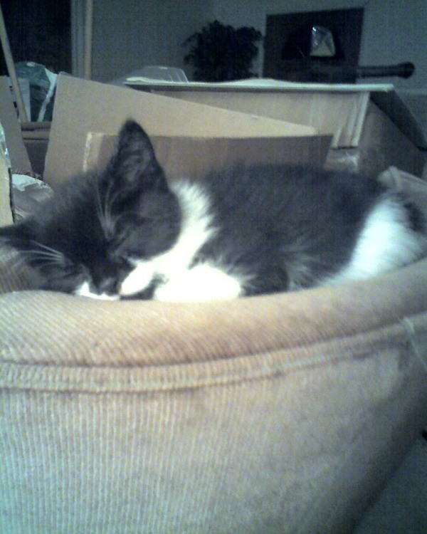 Kitten sleeping in pet bed.