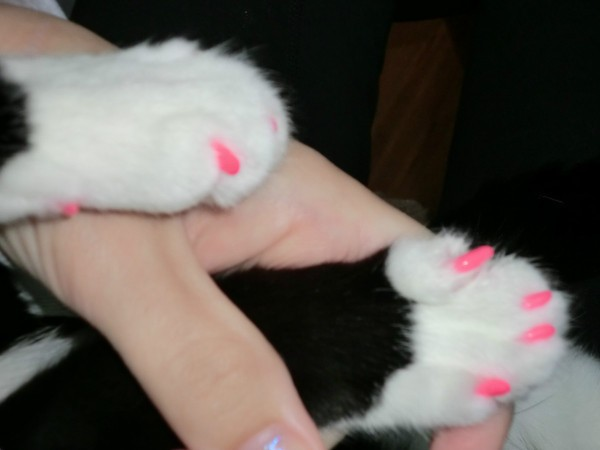 Using Nail Caps on Cats | ThriftyFun
