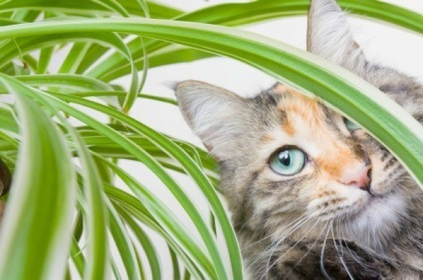A Cat In House Plant