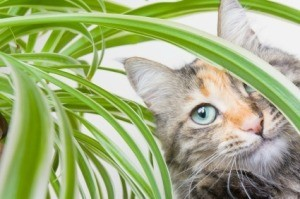 A cat in a house plant.