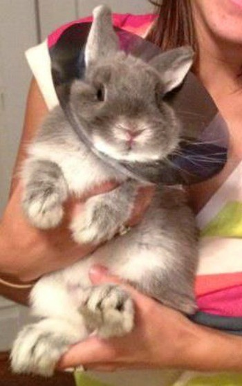 Bunny with a cone on neck.