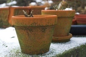 Potted plants outside in the winter.
