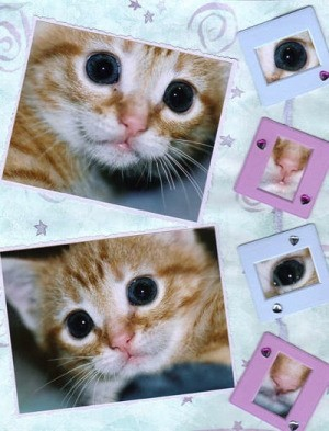 Orange kitten photos scrapbooked on a page