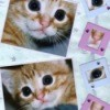 Orange kitten photos scrapbooked on a page