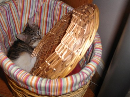 Kitten in hamper.