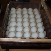 eggs in crisper
