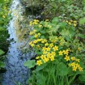 Use Native Plants In Your Landscape