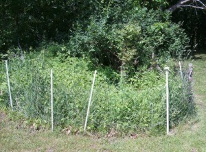 A garden fence to keep pets out