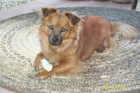 Fuzzy brown dog on rag rug.