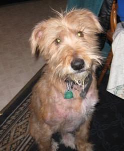 Feeding A Dog With Food Allergies Thriftyfun