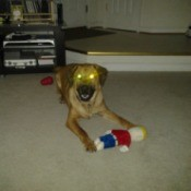 Dog with toy.