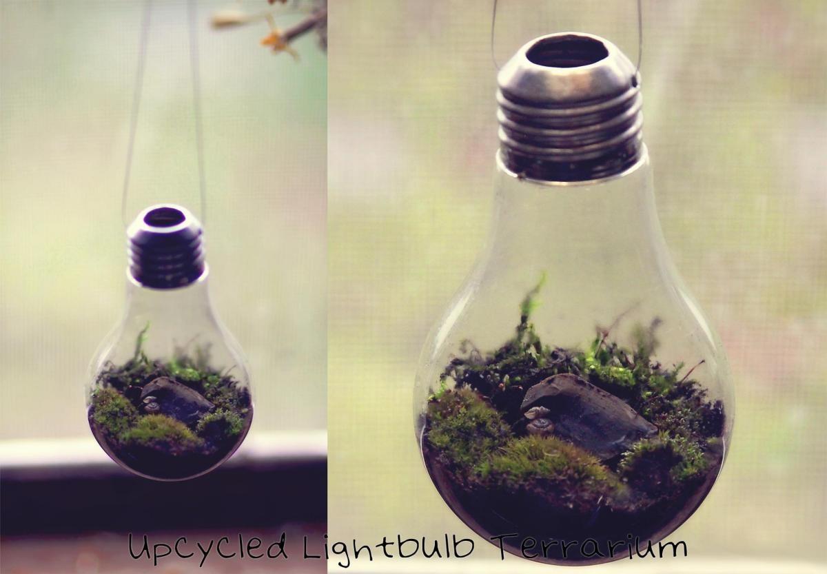 Making A Light Bulb Terrarium Thriftyfun
