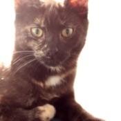 Closeup of Roxy.