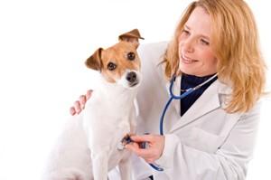 Saving Money on Pet Prescriptions