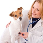 Saving Money on Pet Prescriptions