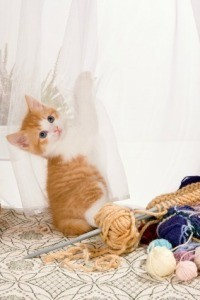 Keeping Yarn Away from Cats