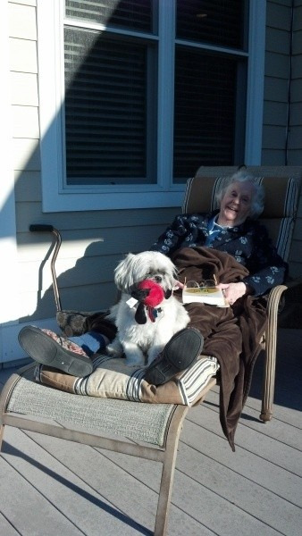 Taylor (Shih Tzu) - Dog sitting on a lounger outside.